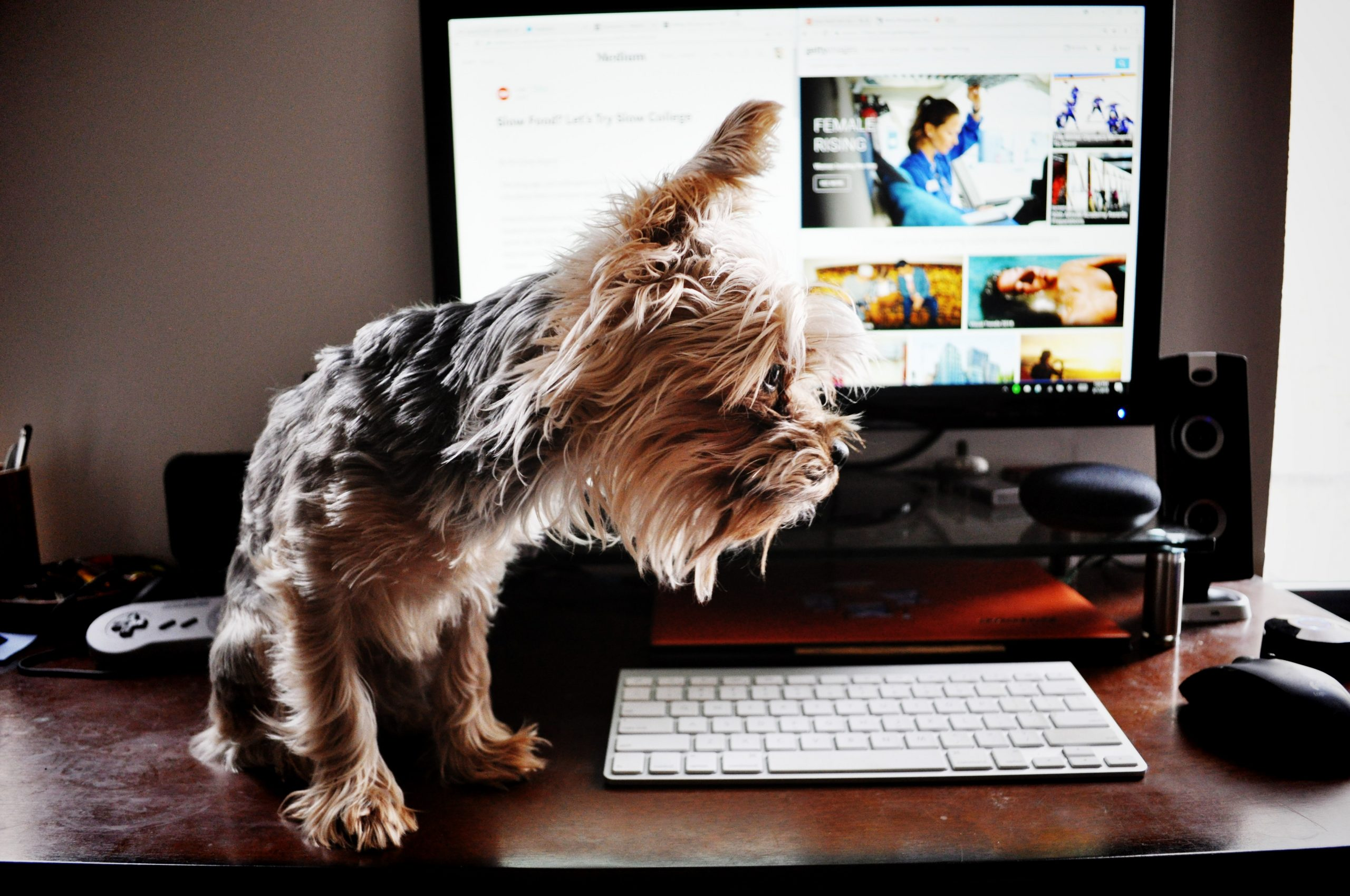 Veterinary Content- Dog and laptop